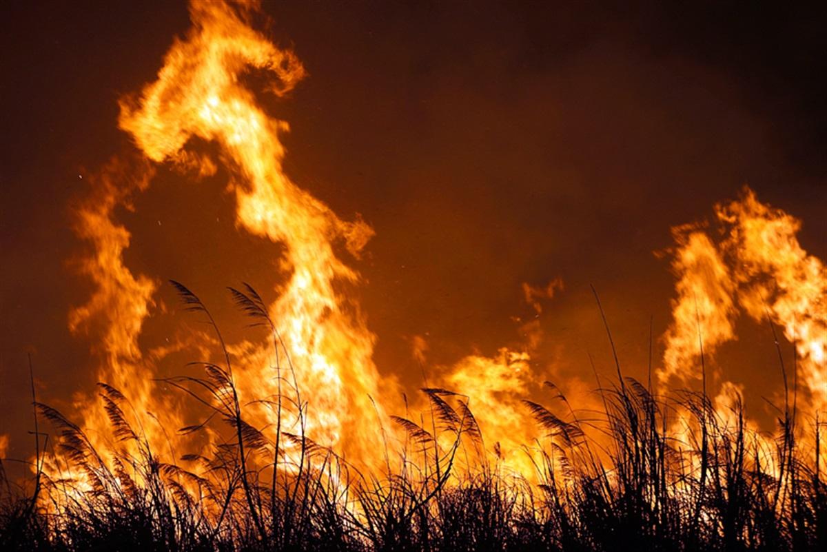 bushfire - photo #27