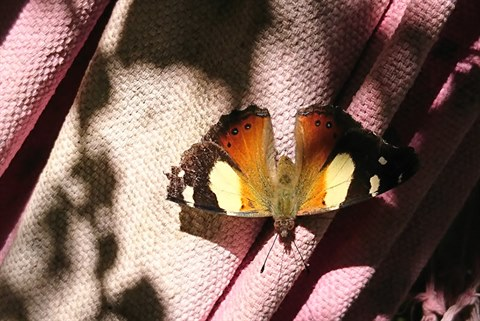 Butterfly on cloth in garden