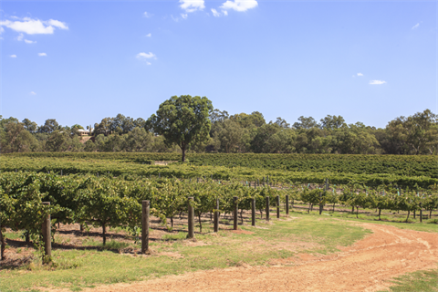 swanvalley_2.png