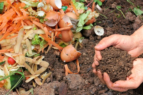 Thinking-Green-Home-composting.jpg